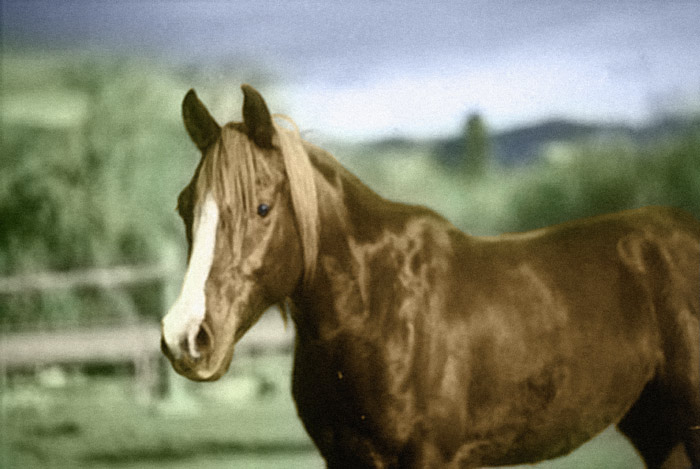 August the horse, Tinting Black and White photos