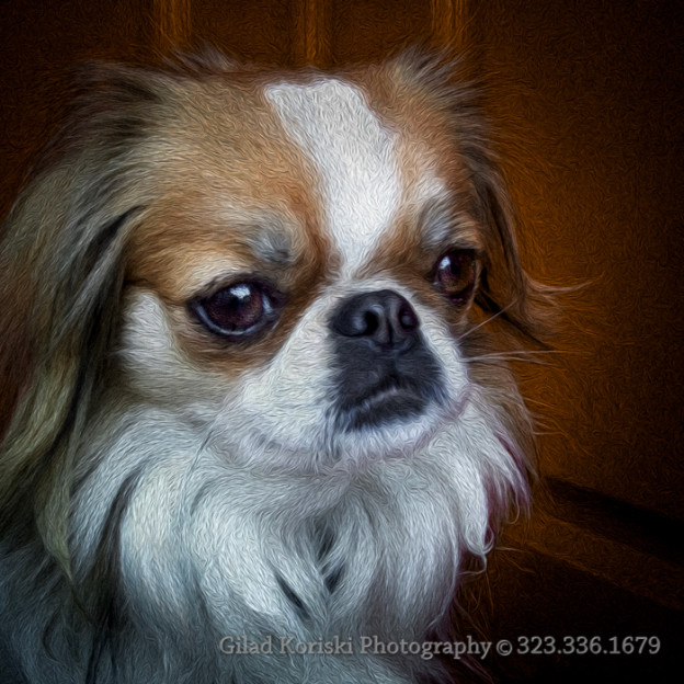 Reilly The Japanese Chin Dog print sold